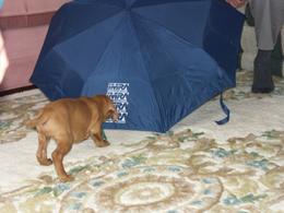 umbrella_268.jpg